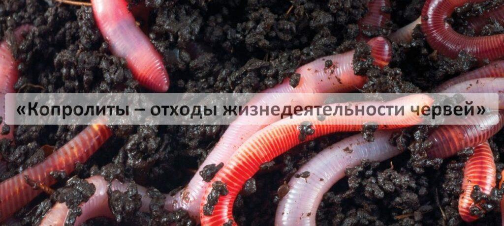 Биогумус производимый червями Старатель