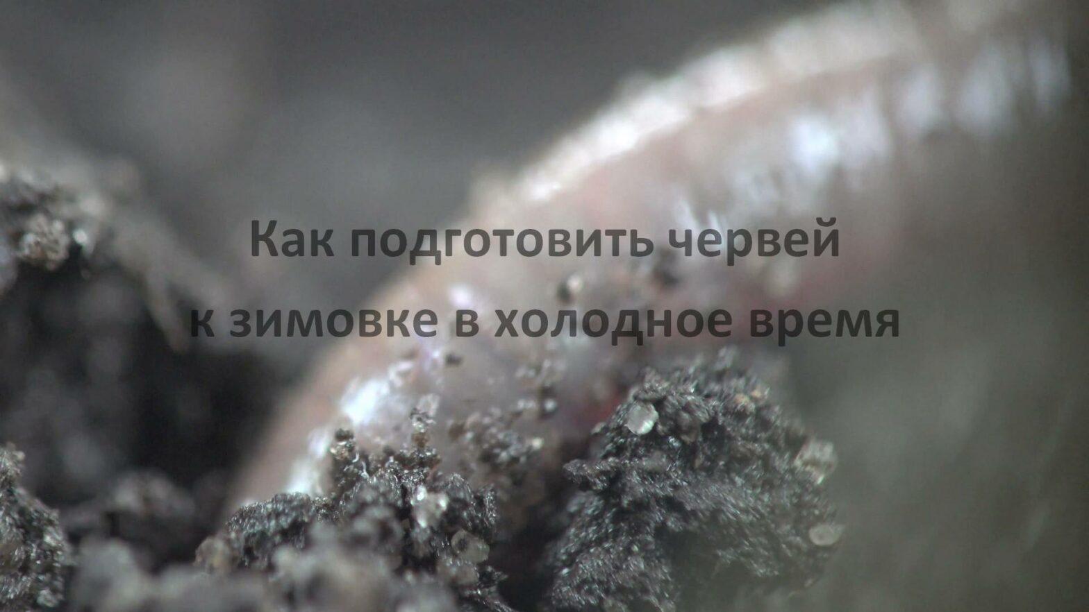 Как подготовить червей к зимовке в холодное время