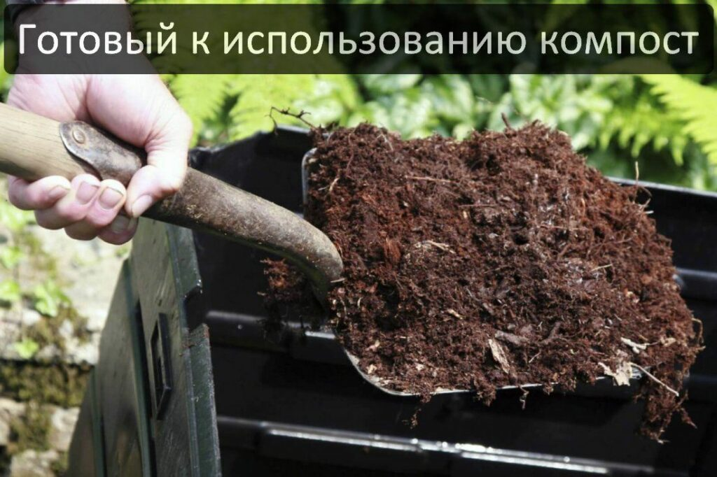Дождевые черви Старатель для компоста