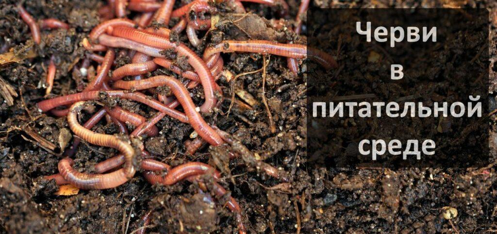 Влияние дождевых червей на плодородие почвы
