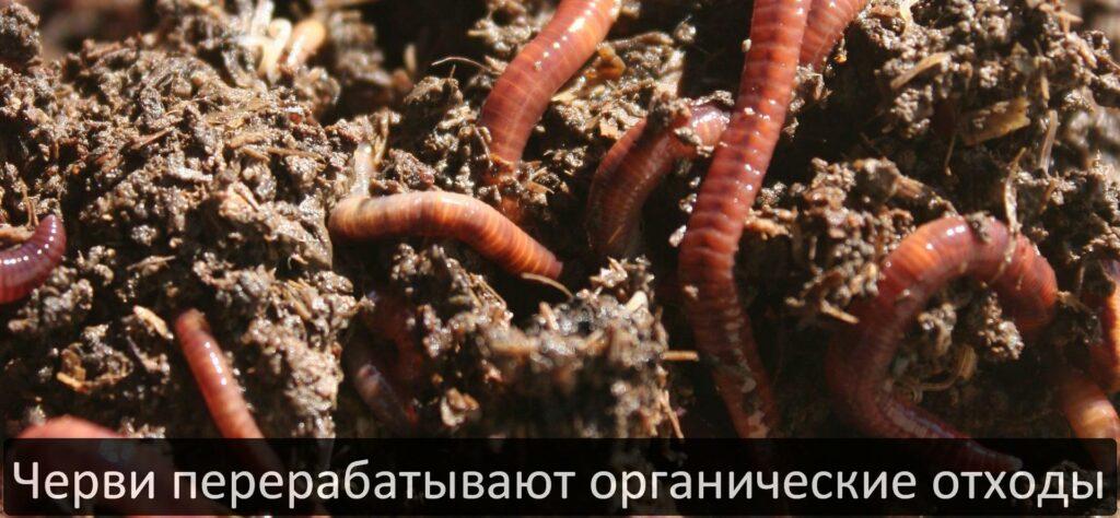 Экологическая утилизация отходов с помощью червей