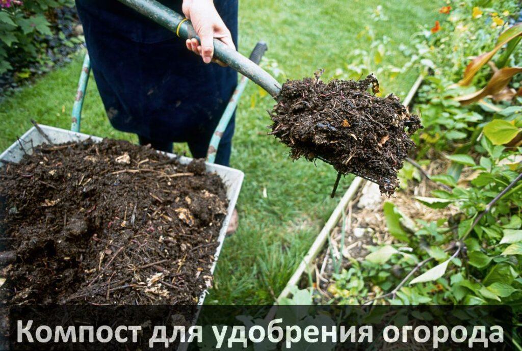 Черви для переработки органических отходов в удобрение