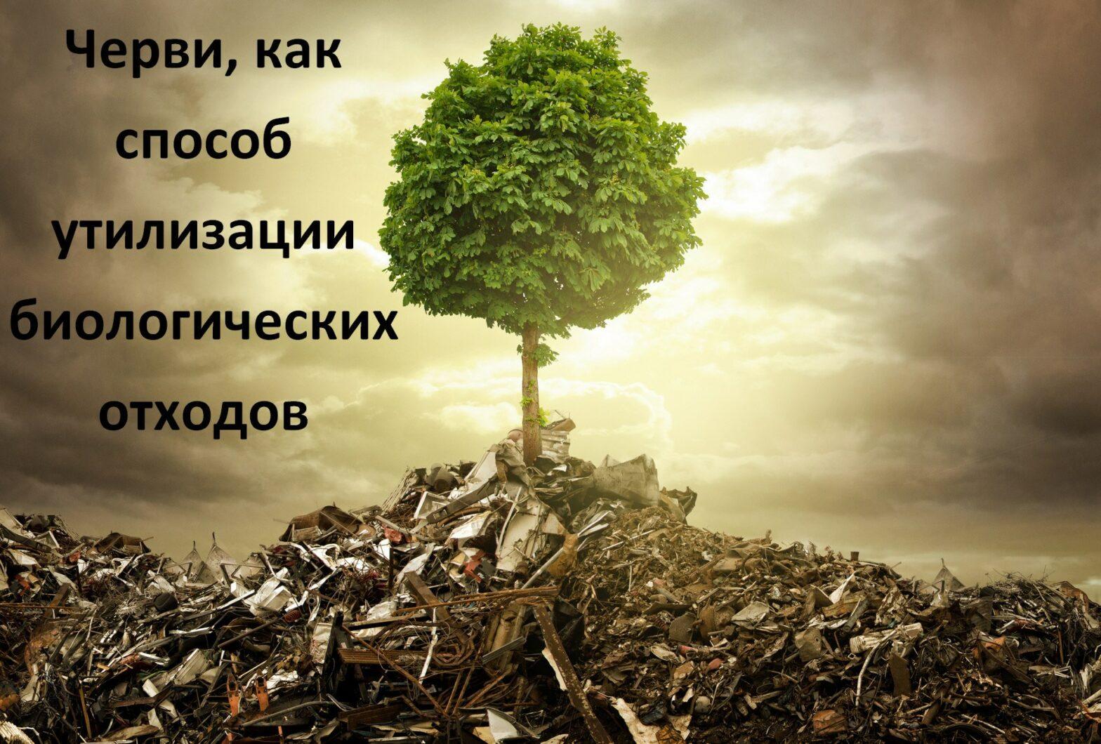Черви, как способ утилизации биологических отходов