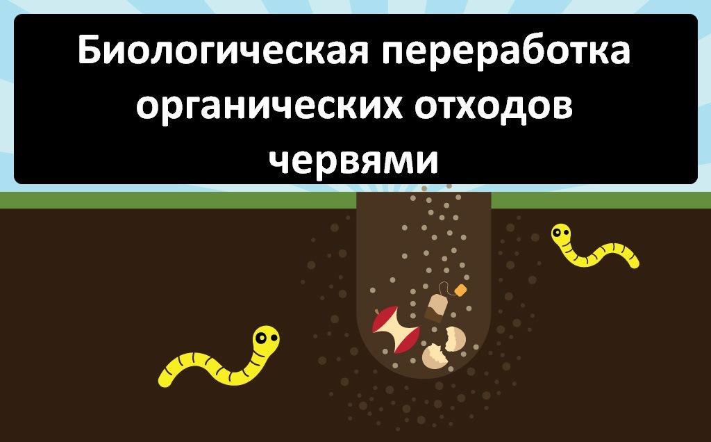 Биологическая переработка органических отходов червями