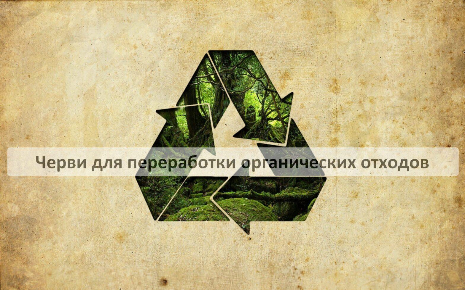 Черви для переработки органических отходов