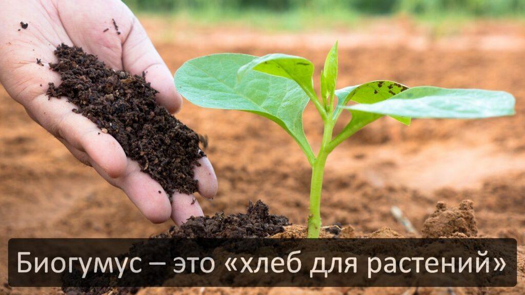 Что такое биогумус, откуда берется, в чем его польза