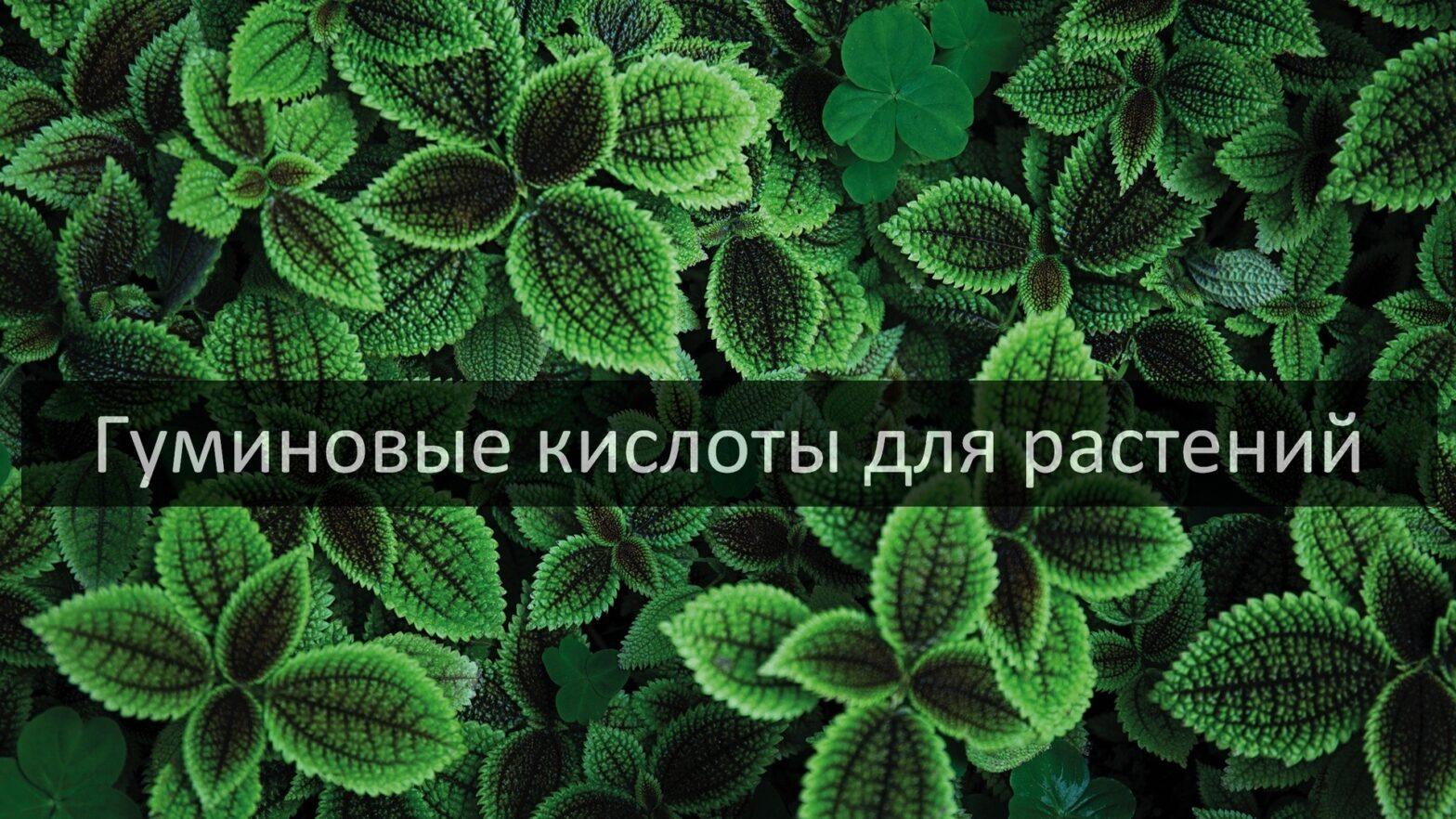 Гуминовые кислоты для растений
