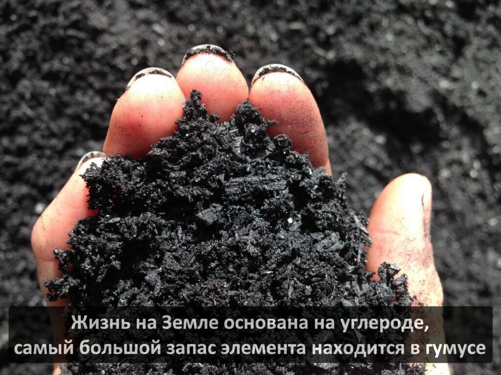 Значение гуминовых кислот в почве. Откуда они берутся