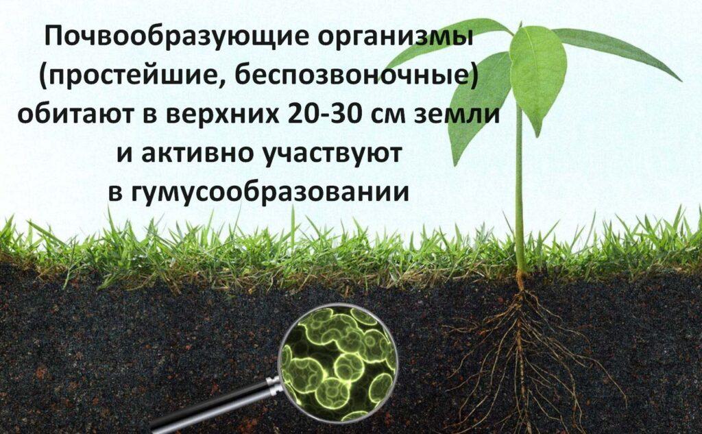 Гумификация почвы. Этапы, процессы