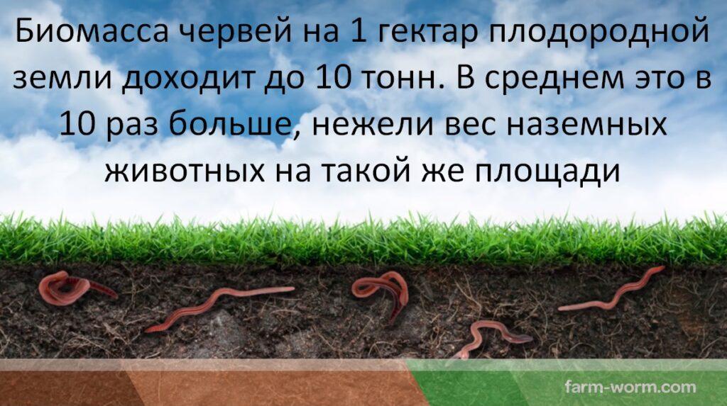Роль и значение червей в природе