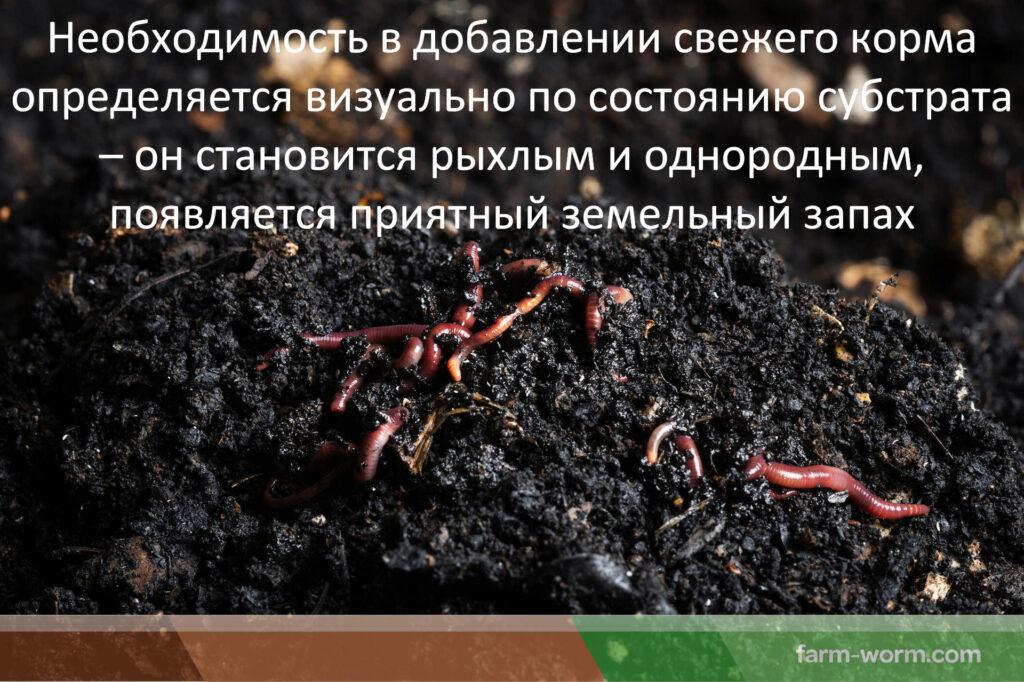 Каким образом происходит заселение червей