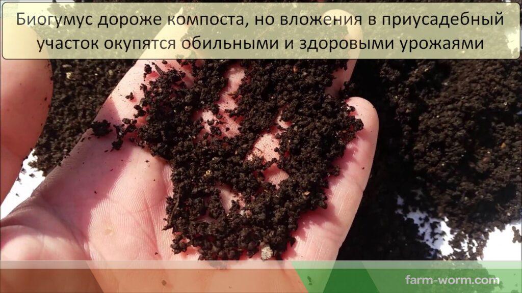 Чем отличается биогумус от компоста