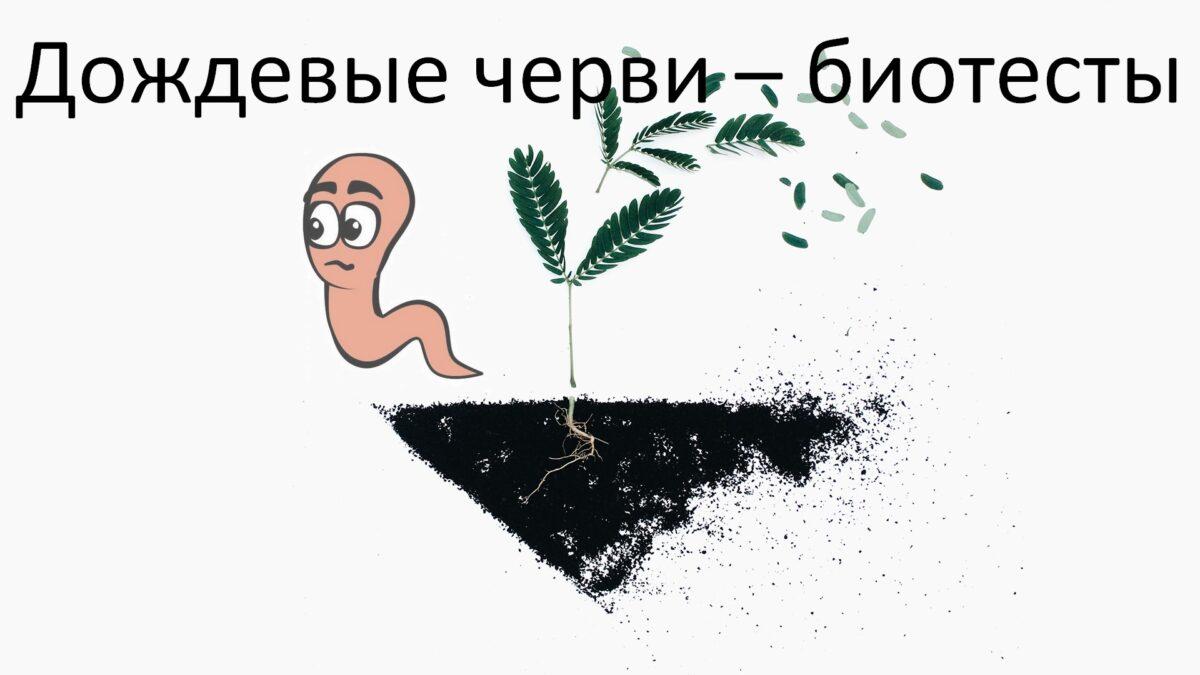 Дождевые черви – биотесты