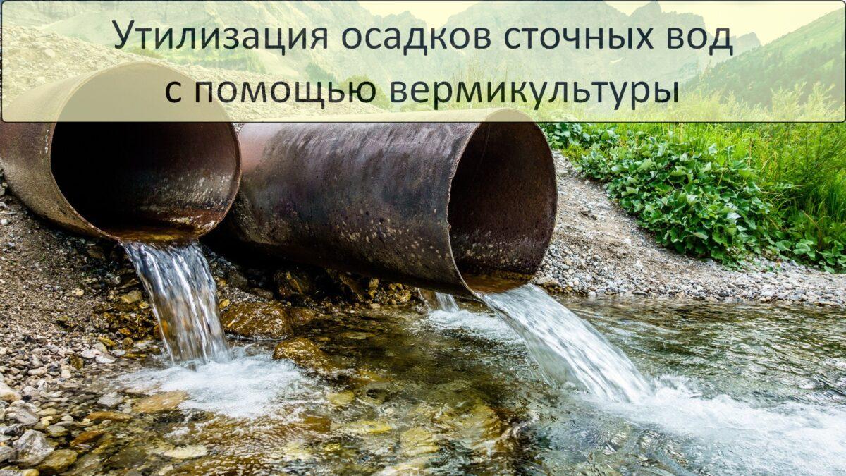 Утилизация осадков сточных вод с помощью вермикультуры