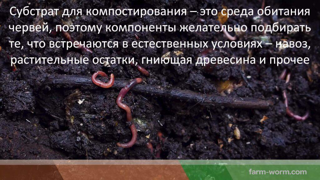 Компостные черви. Выбор и приобретение