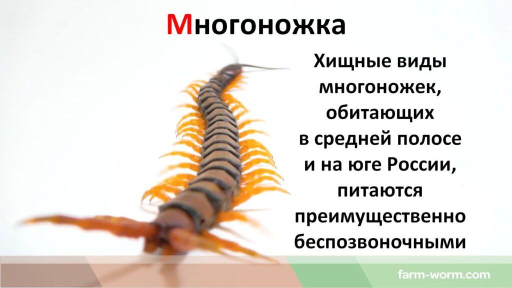 Вредители и паразиты дождевых червей