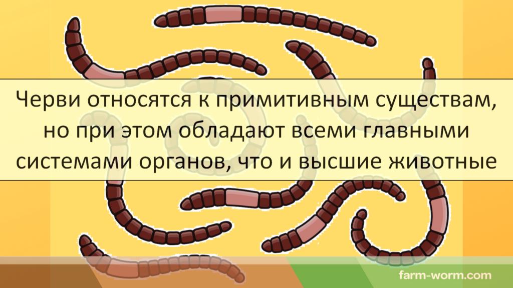 Почему дождевые черви: называются дождевыми, выползают, кольчатые