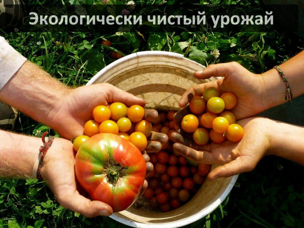 Органическое земледелие при помощи червей