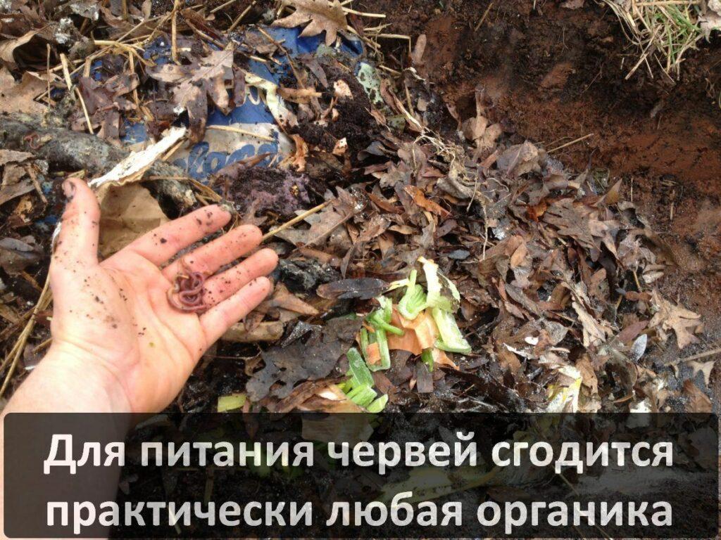 Переработка органических отходов в удобрение