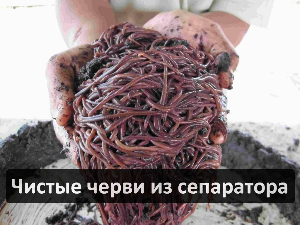 Для чего нужен сепаратор для червей