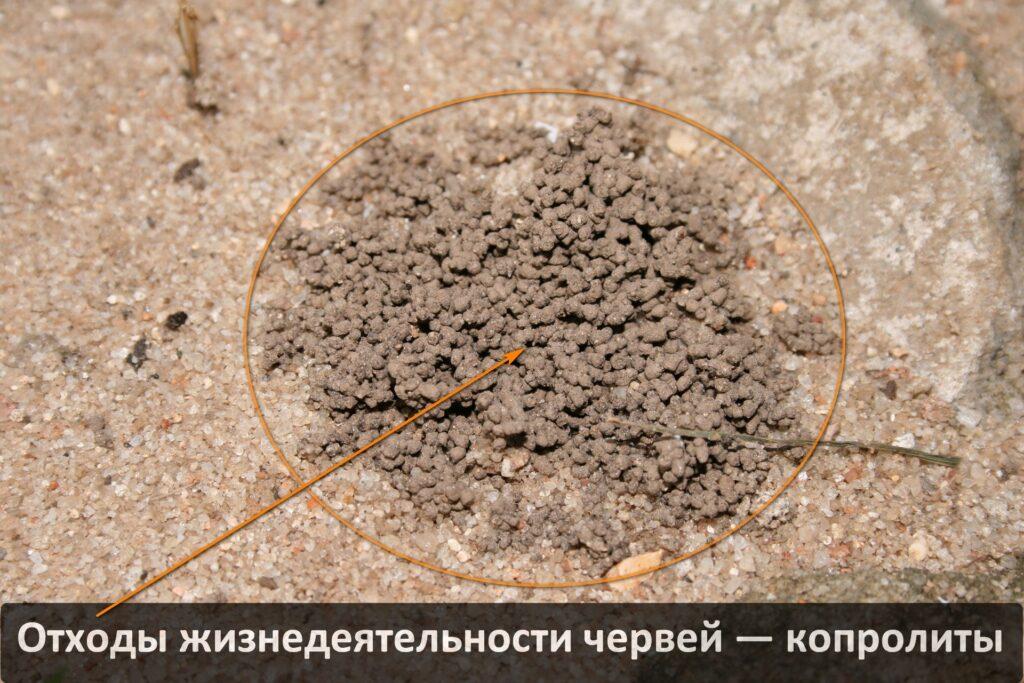 Копролиты земляных (дождевых) червей