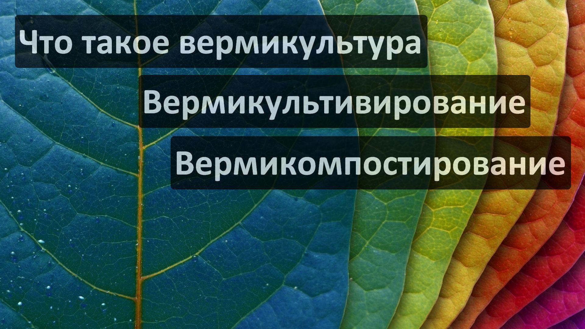 Что такое вермикультура, вермикультивирование, вермикомпостирование