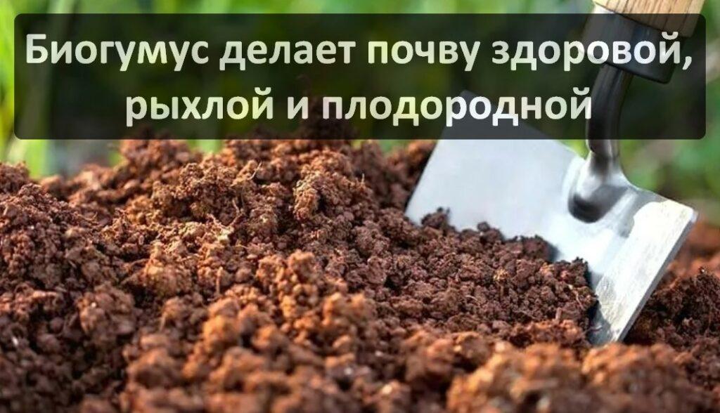 Сухой биогумус. Его применение. Где купить?
