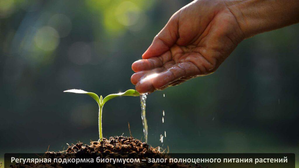 Жидкий биогумус. Применение, инструкция, где купить?
