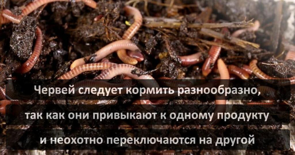 Разведение дождевых червей Старатель