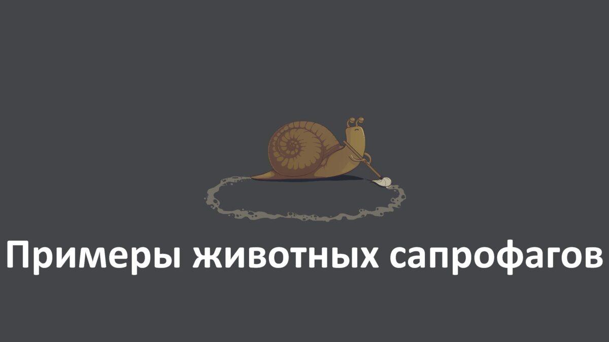 Примеры животных сапрофагов