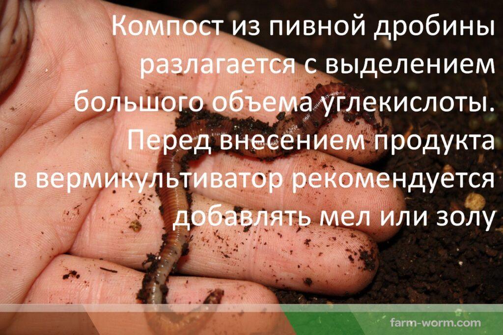 Утилизация пивной дробины дождевыми червями
