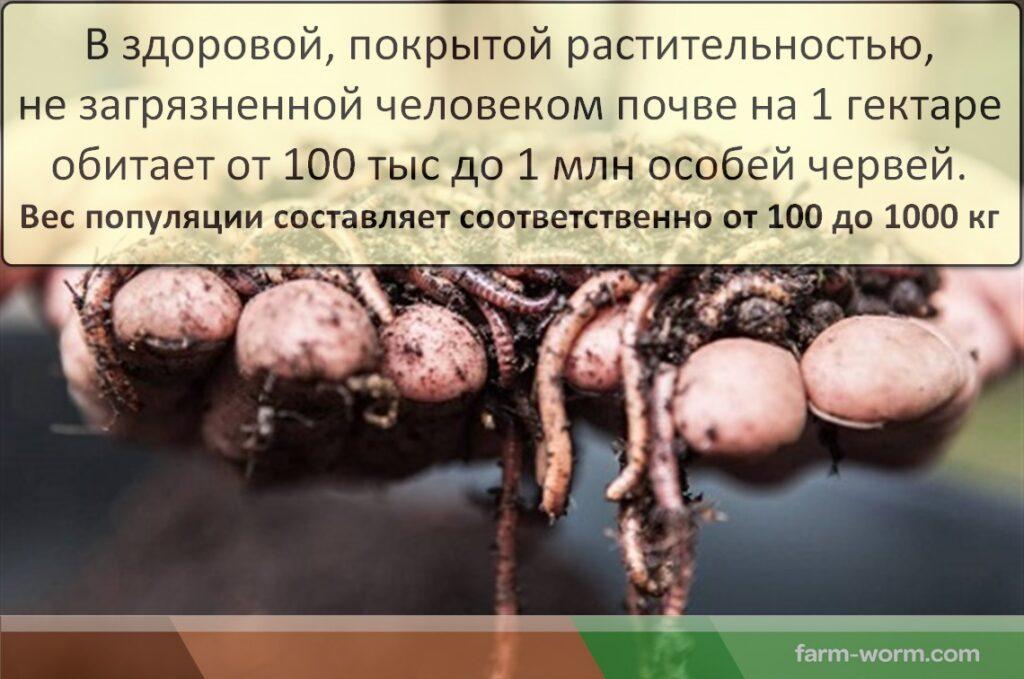 Кто такие компостные черви. Где купить?