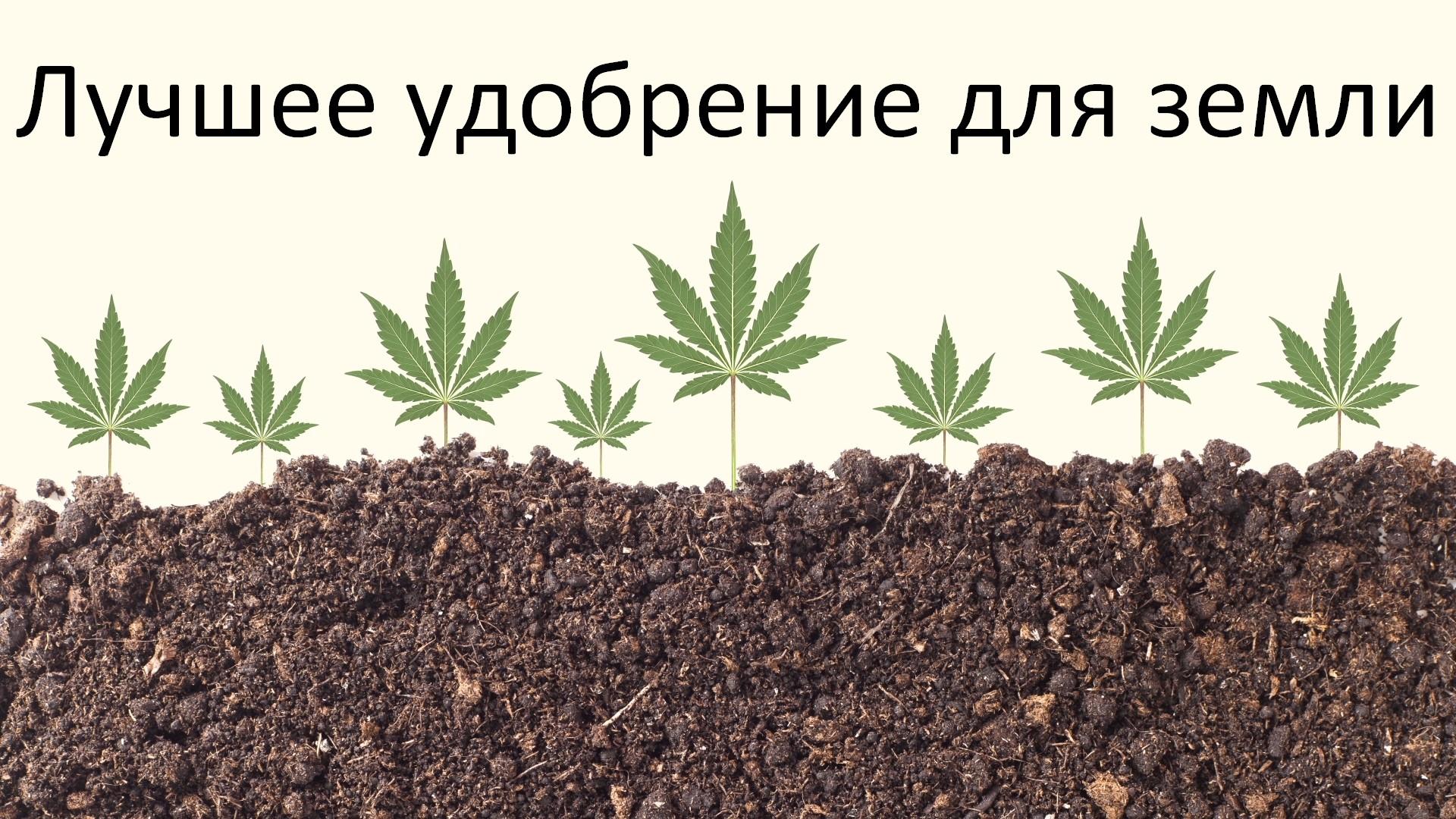 Лучшее удобрение для земли