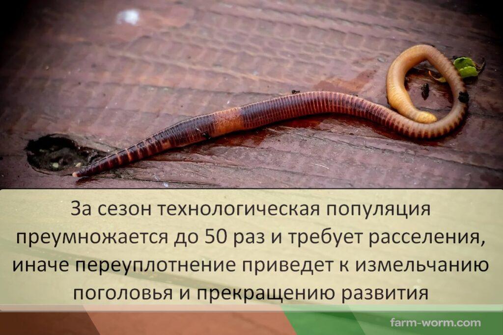 Технологичный червь. Кто это?
