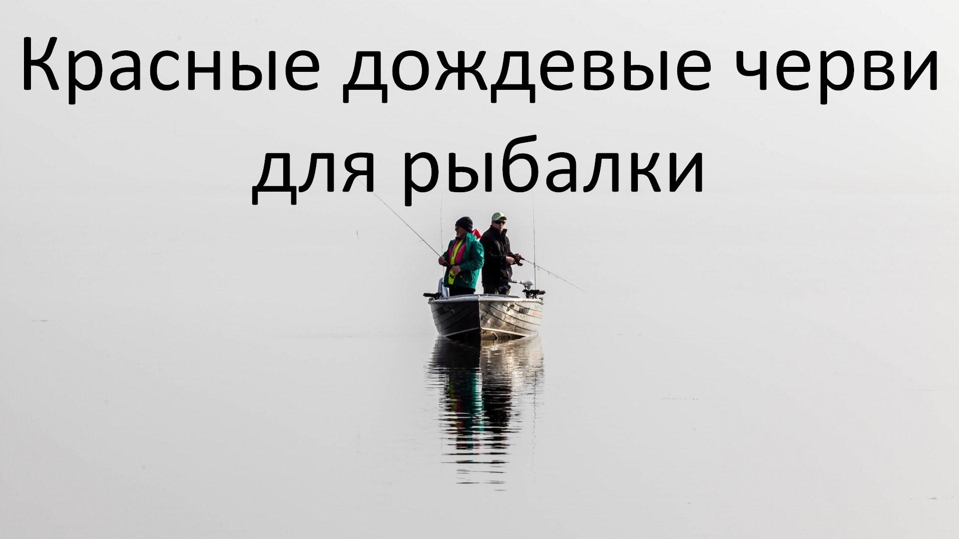 Красные дождевые черви для рыбалки