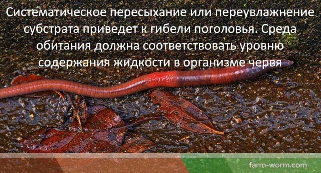 Уход за дождевыми червями
