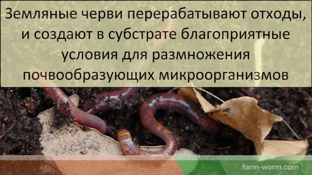 Как черви утилизируют растительный мусор