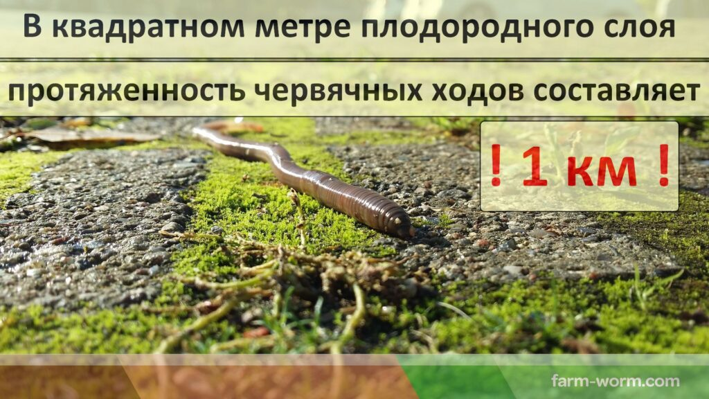 Все о дождевых/земляных червях и больше