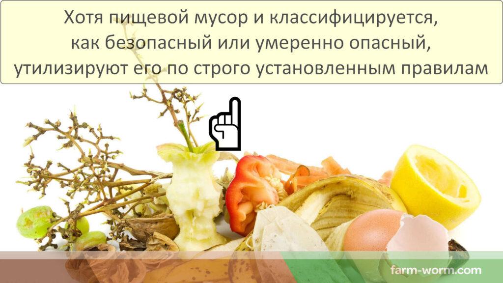 Как организовать пункт приема пищевых отходов