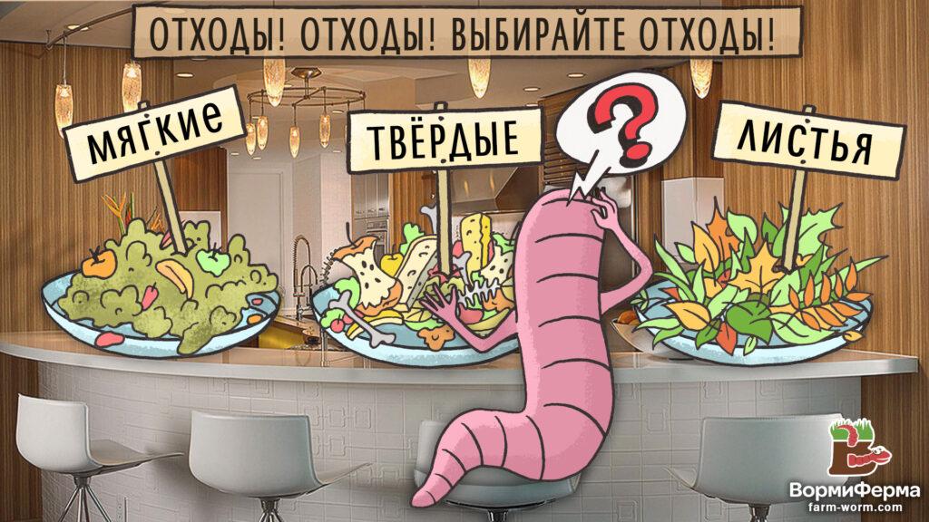 Чем кормить червя старатель