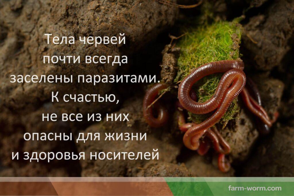 Какие твари и паразиты живут в вермикомпостере