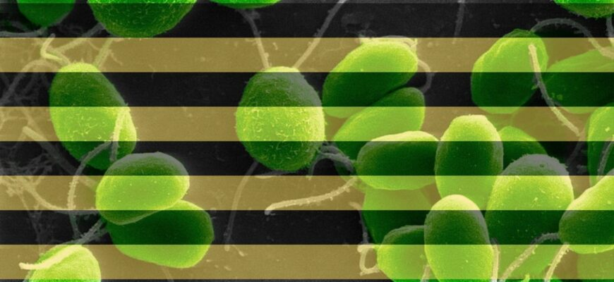 Препараты из эффективных микроорганизмов