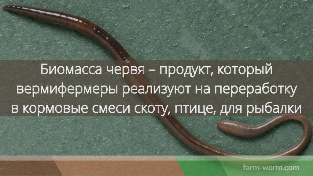 Сколько весит дождевой червь