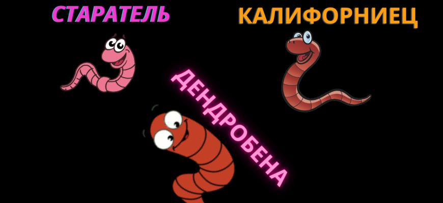Какие черви называются гибридными?