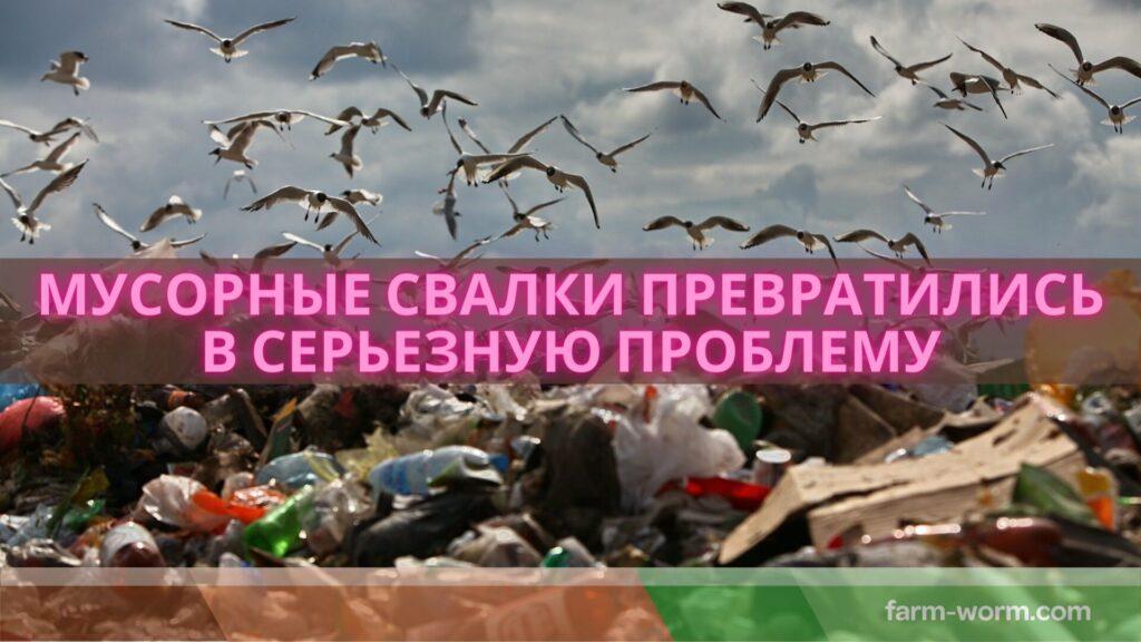 Как самостоятельно утилизировать органические отходы