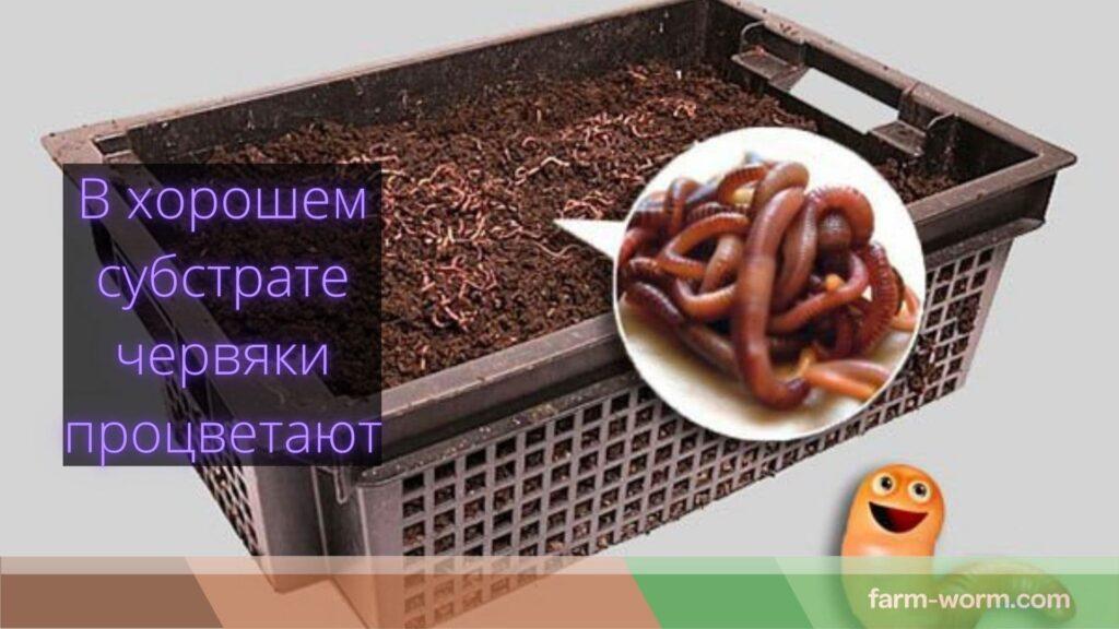 Ферментация ♻️ навоза для червей