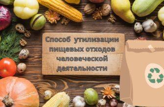 Способы ❌ утилизации пищевых отходов