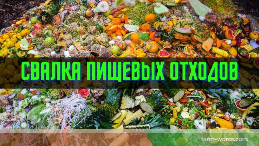 Способы ❌ утилизации пищевых отходов 👥 человеческой деятельности